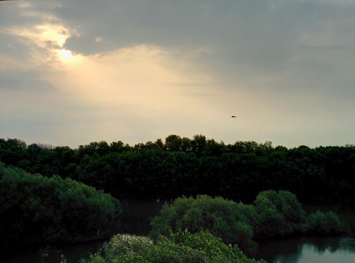Pemandangan dari Menara Pengawas