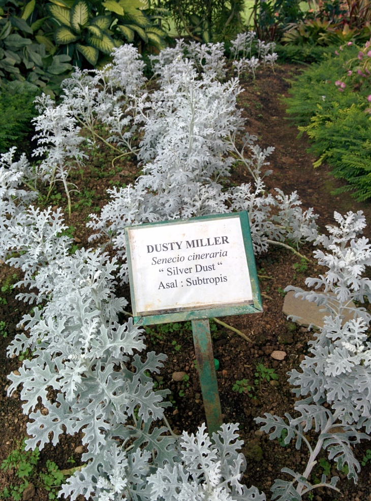 "DUSTY MILLER ""Silver Dust"" part 2"