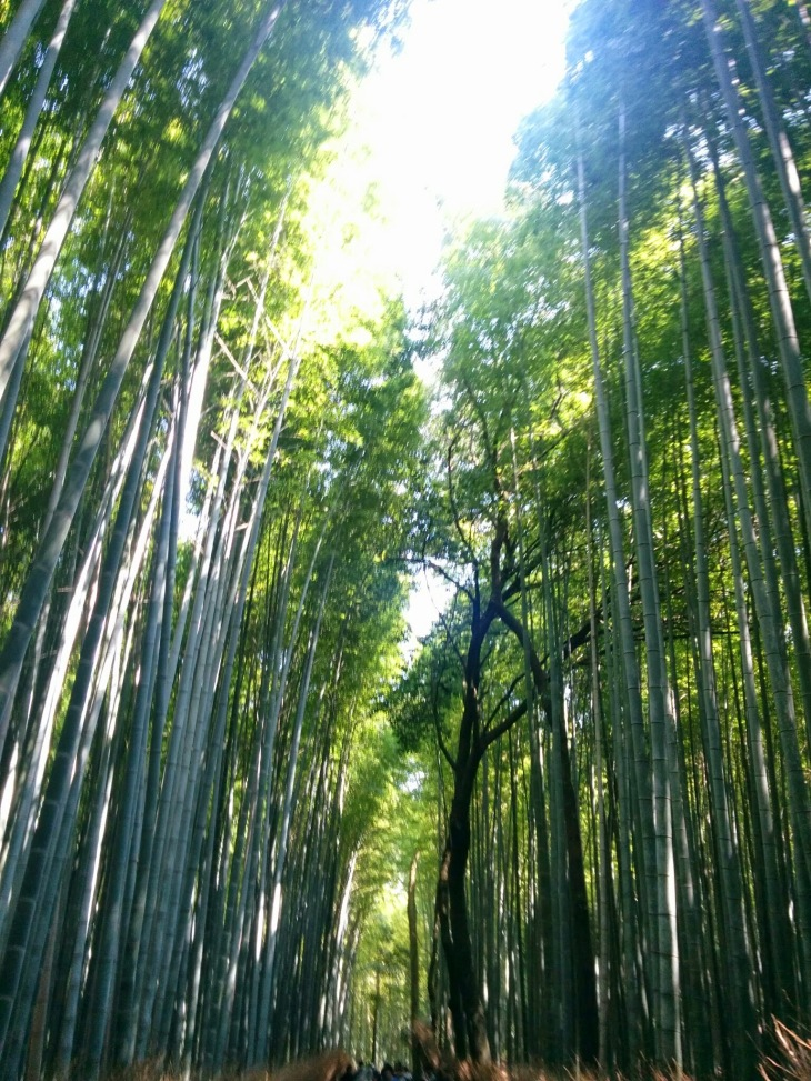 Bamboo Grooves